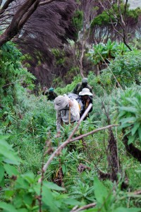 walking_thorugh_forest_nyarigongo