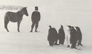 03 - Indian mule and Emperor penguins meet in Antarctica