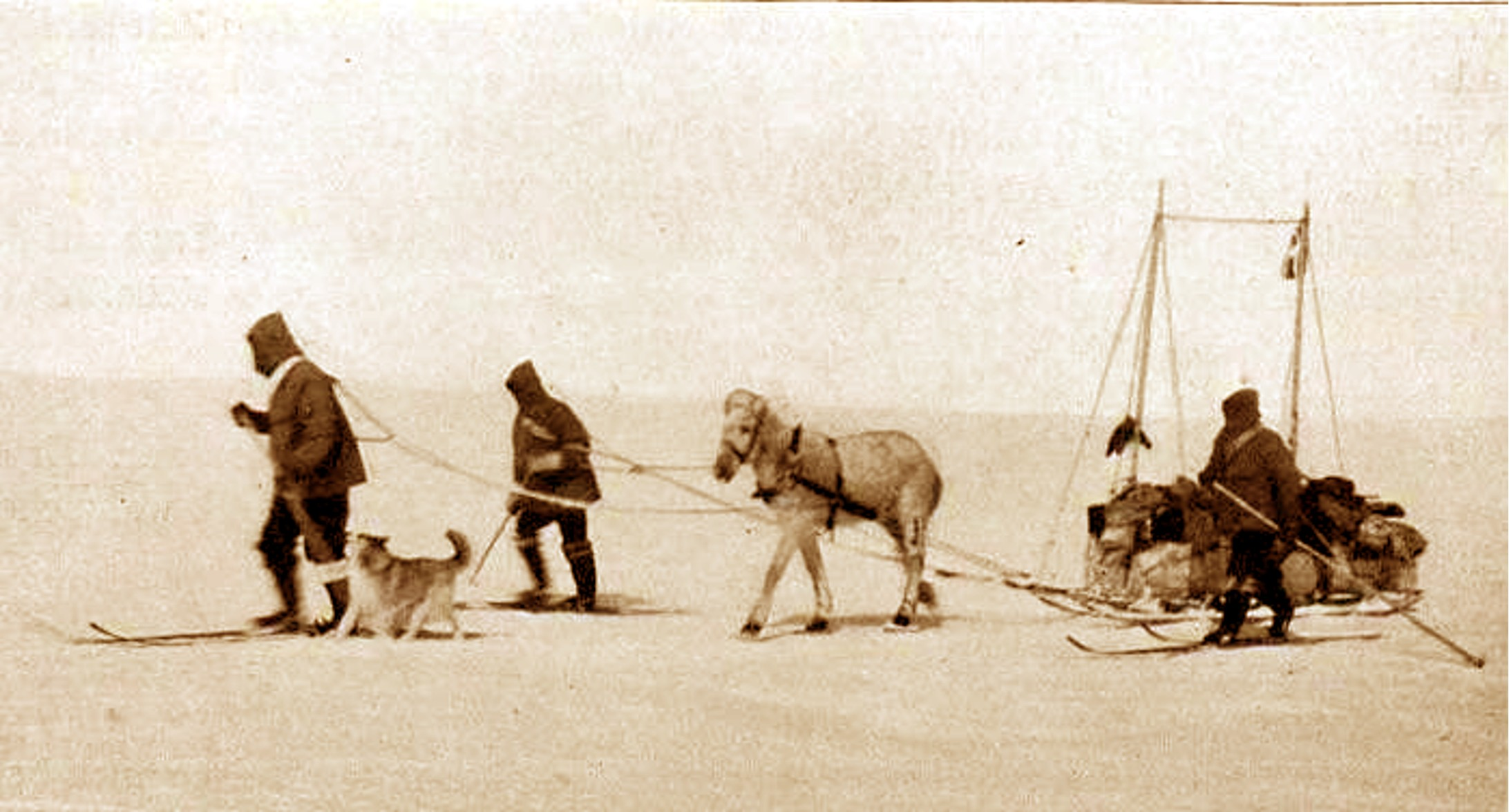 05 - Koch and pony in Greenland