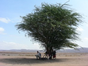 Resting in the shade in Djibouti 2011