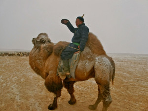 Local-Gobi-herder