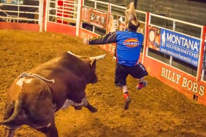 Jim Clash airborne in the Texas ring after being thrown by bull Horny Toad. At this point, Clash is just along for the ride. (Photo: Andy Gregory/Humps n Horns Magazine)