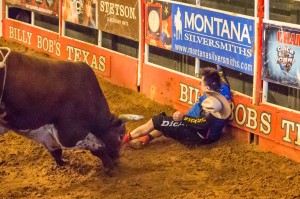 Jim Clash with bull Horny Toad after being thrown into the fence in the Texas ring. PBR bull-fighters Frank Newsom and Shorty Gorham quickly distracted the bull before it had a chance for a second attack. (Photo: Andy Gregory/Humps n Horns Magazine)