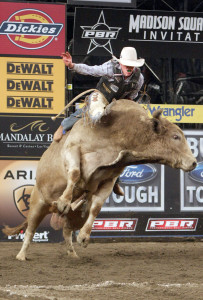The goal of a PBR bull-rider is to stay on an angry bull for at least 8 seconds. Fewer than half the riders are able to do so. (Photo courtesy of PBR)